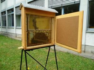 Ein Vorbild für unsere Schüler: Die fleißigen Honigbienen